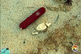 Cypresshead Fm burrow with fecal pellets.jpg