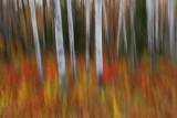 Autumn 2008