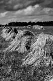 Amish Hay
