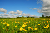 Blue sky, moving clouds and a field of dandelions - that's spring!