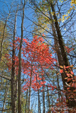 Fall Red on Blue