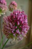 146 flower.jpg
