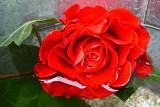 152 rose in water.jpg