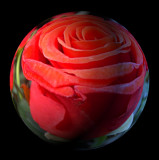 rose sphere.jpg