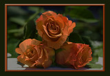 three orange roses.smudged in Photoshop