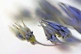 Seedam seedheads