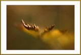 Autumn leaves.....