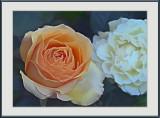 orange rose...
