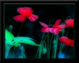 Orton effects on flowers,butterflies etc!!!