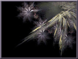 colarity flowers....