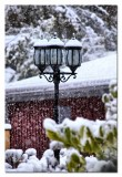 the street lamps look elegant with their white hats...