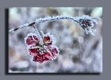 frozen in time...