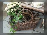 4-in-the-basket.jpg