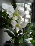 11-orchids.jpg