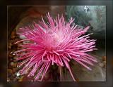 12-its-pink.jpg
