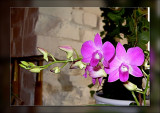 32-more-orchids.jpg