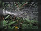 web in garden.