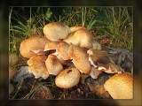 a few toadstools.