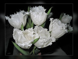 tulips frilly white