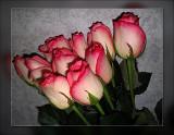 pink n white rose