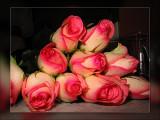 pink n whiterose