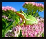 daves frog