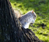 Squirrel oils