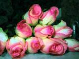 pink n white
