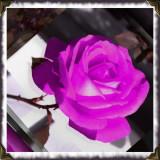 lonely rose inn