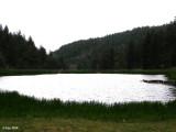Camp 302.jpg