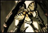 IMG_0374-copy-gold-bfly.jpg