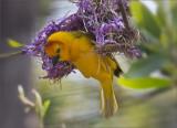 Birds of the Oakland Zoo