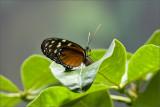Butterfly Break