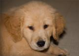 Max, 9 Weeks