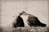 ...a kiss is just a kiss  (bw)
