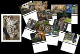 2011 Zoo Shots
