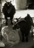 Childrens Zoo