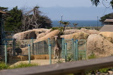Around the Zoos