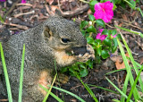Squirrely for Nuts