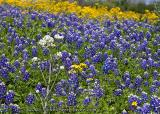 Wildflower Medley