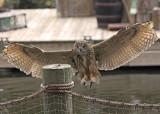 Palm Beach Florida Zoo