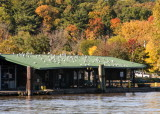 Fall trip down the Hudson River @ Hudson NY