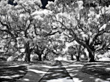 black_and_white_infrared