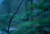 Forest, Rain, Dusk