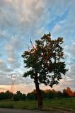 Tree, Pylon And The Sky Pattern