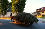 Hey! You're Loosing Hay!!