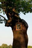 Little Shrine On The Tree