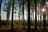 Sunshine In Beech Forest