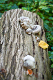 Fungi On A Trunk