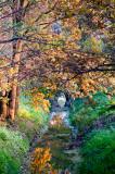 Autumn Scene In Park